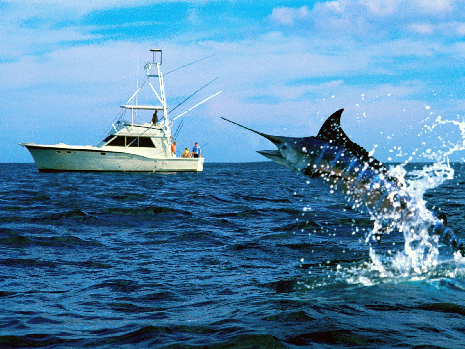 Top boat charter trips including sunset cruise in riviera for Deep sea fishing bay area