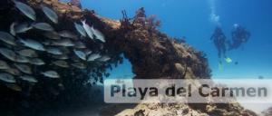 Scuba Diving Riviera Maya